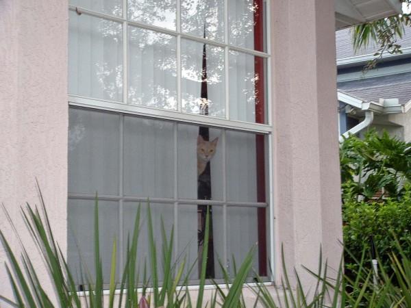 Phibo anticipating my return home